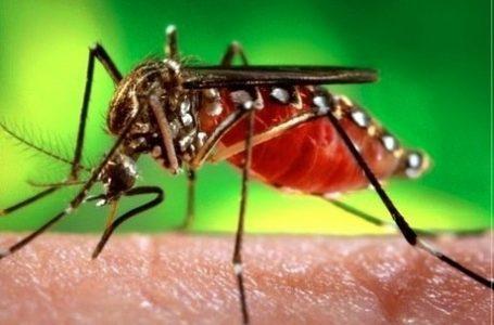 Vírus da zika pode causar complicações neurológicas em adultos, diz estudo da UFRJ