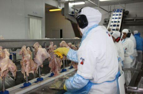 Abatedouro de Aves da cidade de Arapongas demite 125 trabalhadores