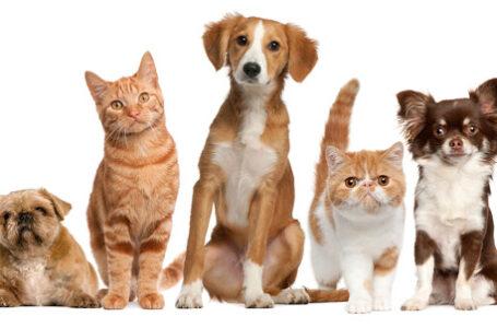 Lei que que aumenta pena para maus-tratos a cães e gatos é sancionada
